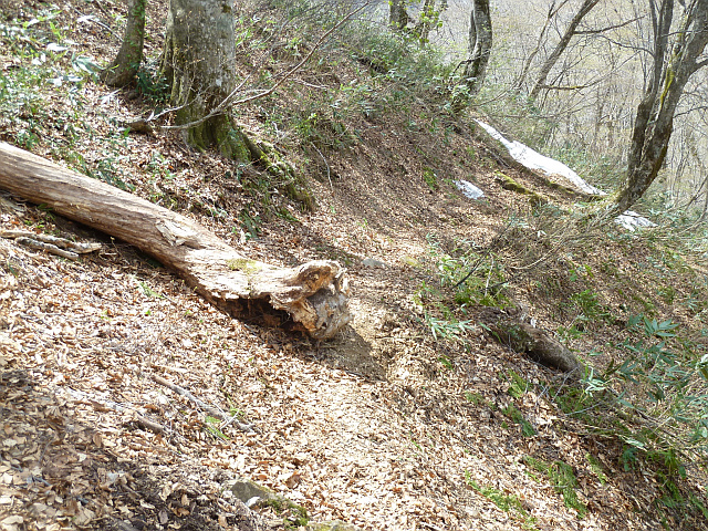 登山道倒木